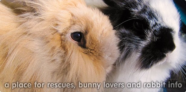 A place for rescues, bunny loves and rabbit info