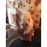 Bramley Rabbit Rescue