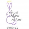 Angel rabbit rescue