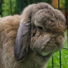 Southampton Rabbit Rescue