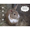 Warwickshire Rabbits & Guinea Pigs S.O.S