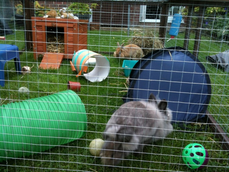 Toys For Bunnies : Rabbit playtime