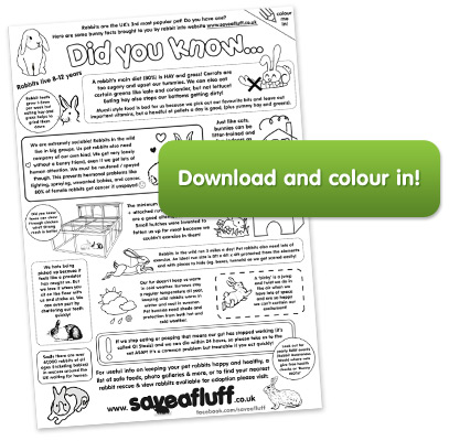 Download rabbit colouring sheet