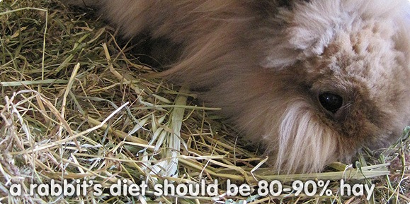 A rabbit's diet is 80-90% hay