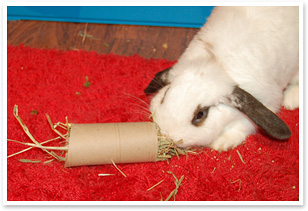 Toilet roll stuffed with hay makes a fun toy