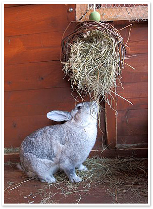 what bugs a bunny rspca rabbit welfare campaign