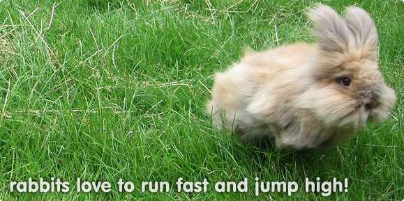 Rabbits need space to exercise