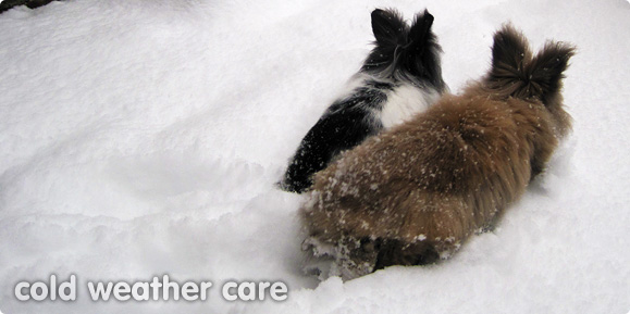 Caring for your rabbits in cold weather
