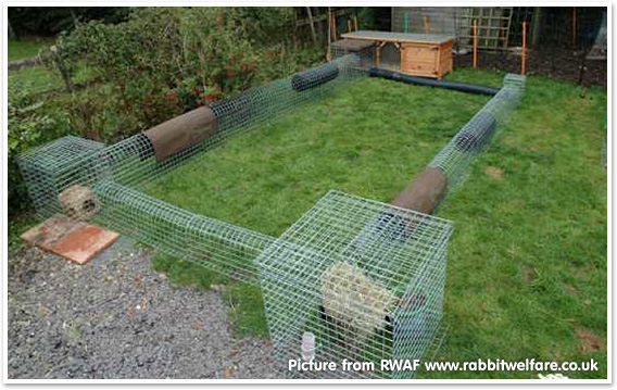 Runaround - RWAF www.rabbitwelfare.co.uk