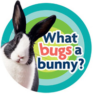What bugs a bunny?